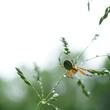 Gestion différenciée - Araignée dans une prairie