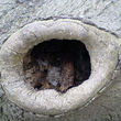 Cavité d'arbre