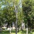 Suivi sanitaire d'un arbre mort à Lens