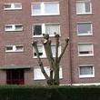 Taille drastique d'arbres