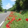 Bord de route fleuri