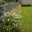 Jardin des simples à Beauvais