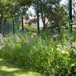 Fleurissement durable le long de clôtures
