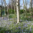 Fleurissement durable de sous-bois urbains