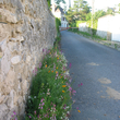 Pied de mur fleuri