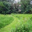 Chemin dans pelouse haute