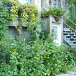 Jardin privé sauvage à Montréal