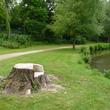 Souche d'arbre transformée en mobilier à Senlis