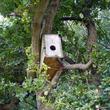 Nichoir dans un arbre