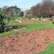 Paillage en espaces verts à Lyon