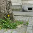Herbes folles et pied d'arbre à Lille