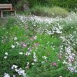 Prairie fleurie à Bailleul