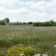 Prairie fleurie dans le Kent