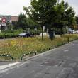 Semis de prairie fleurie à Valenciennes