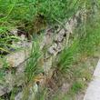 Muret de pierres sèches végétalisé
