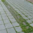 Joints de pavés végétalisés