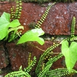 Mur de briques végétalisé