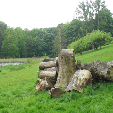 Tas de bois mort dans un espace vert à Bruxelles