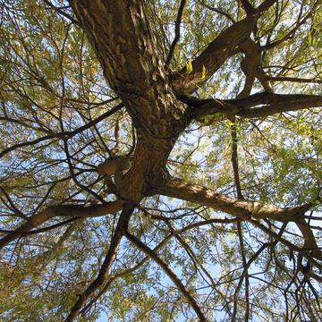 Cime d'un arbre