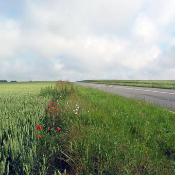 Bord de champ fleuri