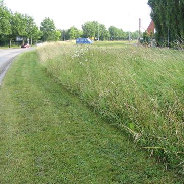Gestion d'un bord de route en prairie
