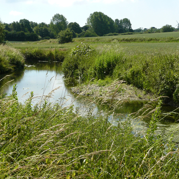 Cours d'eau à Ashford