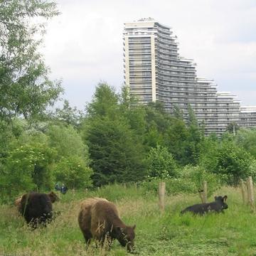 Éco-pâturage urbain à Bruxelles