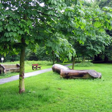 Espace vert et bois mort