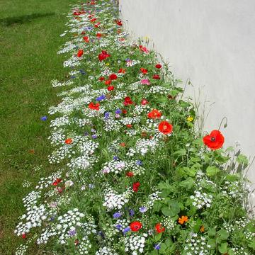 Fleurissement durable en pied de mur