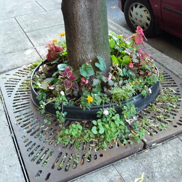 Pied d'arbre fleuri