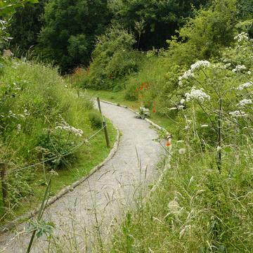 Chemin fleuri dans le Kent