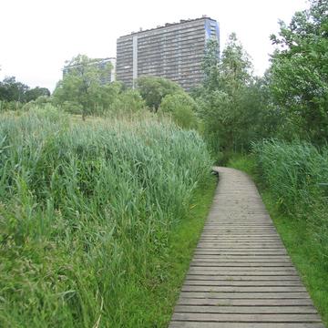 Platelage et nature en ville
