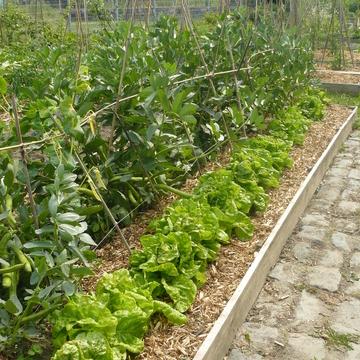 Jardins potager à Roubaix