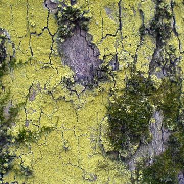 Mousse et lichens