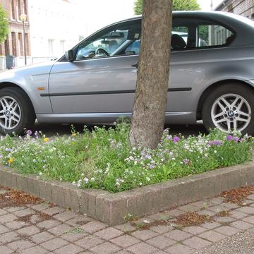 Pied d'arbre fleuri à Marck