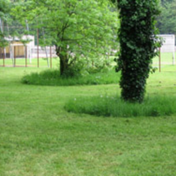 Pieds d'arbres en gestion différenciée dans un parc urbain