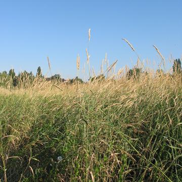 Prairie naturelle à Beauvais
