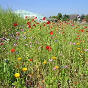 Semis de prairie fleurie