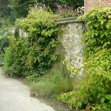 Mur de rue végétalisé