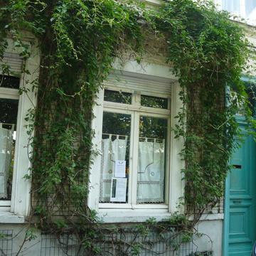 Façade végétalisée à Lille